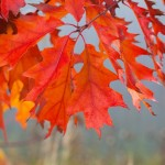 Bringing autumn into your home