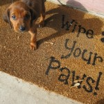 Paws for Thought – Puppy-proofing your home