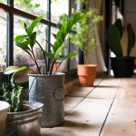 Bringing the outside in for dummies: indoor plants you can't kill