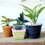 How to keep your plants alive while you are away on vacation