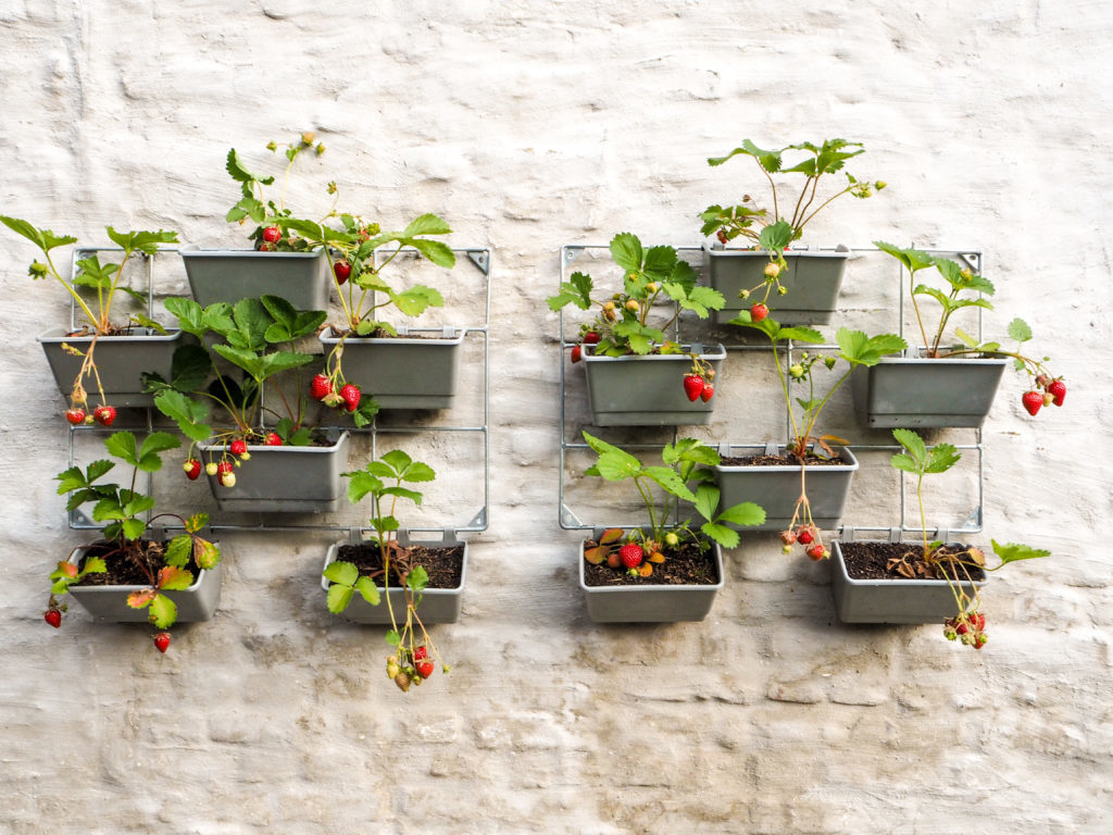 Alors, ça pousse? 10idées géniales pour les petits jardins