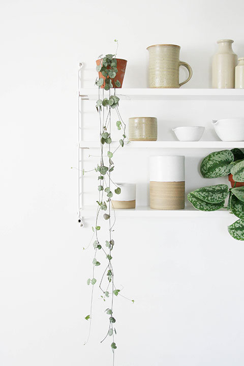 Trailing-plants-on-shelving