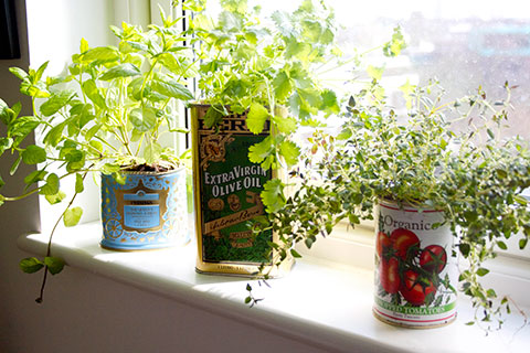 herbs-in-recycled-tins-in-kitchen