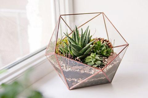 plant-cube