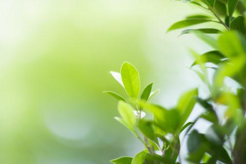 Groen en gezond leven én tegelijkertijd geld besparen!