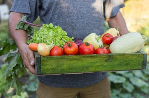 Zelf groente kweken – iets voor jou?